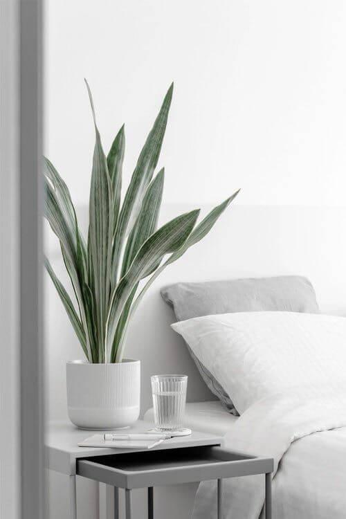 Cara menghias kamar tidur bunga - lidah mertua
